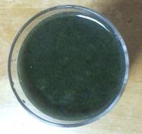 topvalu-guri-nnsumu-ji-juice2